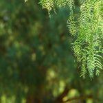 walnut-country-the-crossings_greenbelt_21